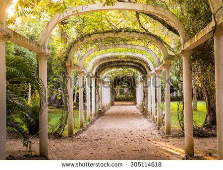 stock-photo-parkway-in-rio-de-janeiro-botanical-garden-brazil-305114618
