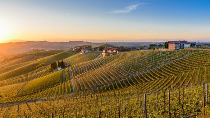 vineyard at sunset (barbaresco)