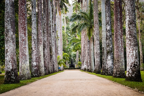 Path with palm trees