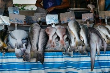 Rows of fish at a market in Rio de Janeiro, Brazil