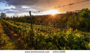 stock-photo-grape-leaves-background-warm-yellow-sunbeam-through-fresh-tree-leaves-taken-in-piedmont-italy-416113096