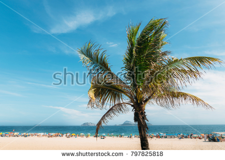 stock-photo-single-palm-tree-with-out-of-focus-ipanema-beach-in-rio-de-janeiro-brazil-background-7978258181